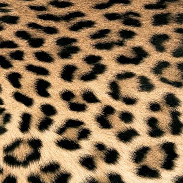 Leopard Couture 33x33 cm