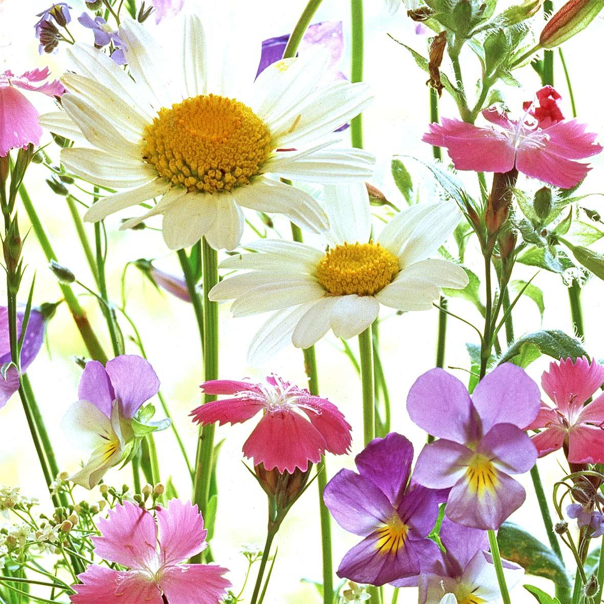 Flower Field 33x33 cm