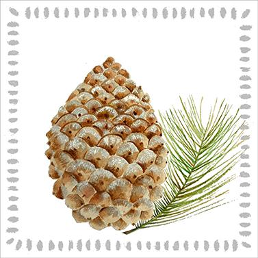 Pine Cone nature 33x33 cm
