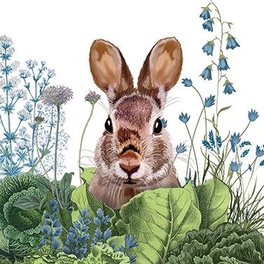 Chou Chou Bunny 33x33 cm