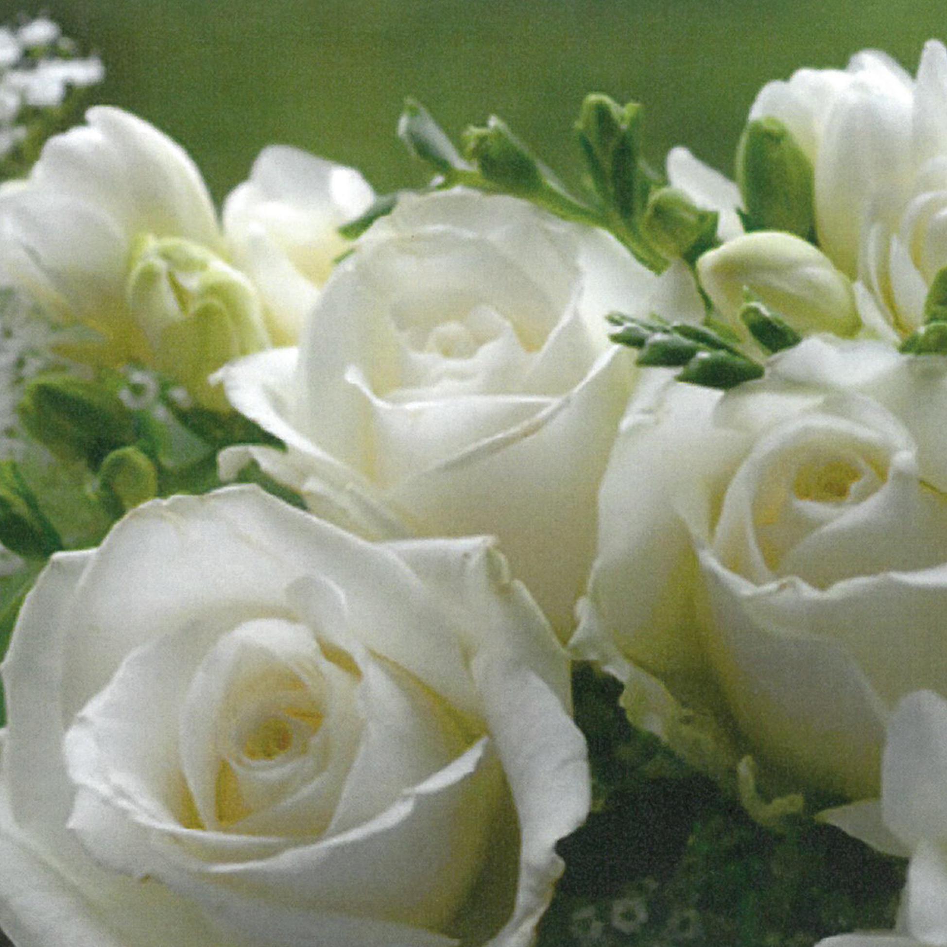 White Roses 33x33 cm