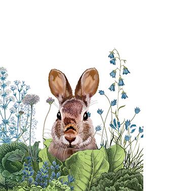 Chou Chou Bunny 25x25 cm