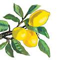 Lemon Musée white 33x33 cm