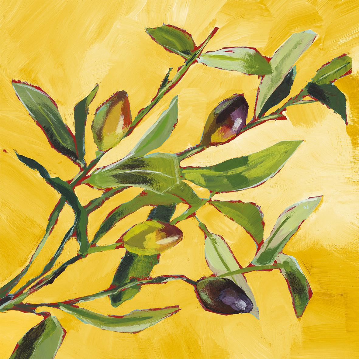 Olive Musée 33x33 cm
