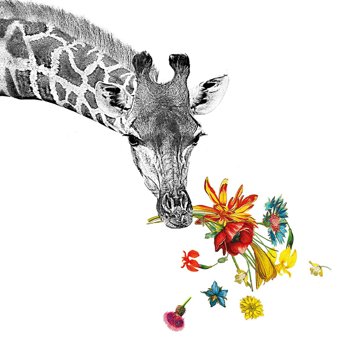 Happy Giraffe 25x25 cm