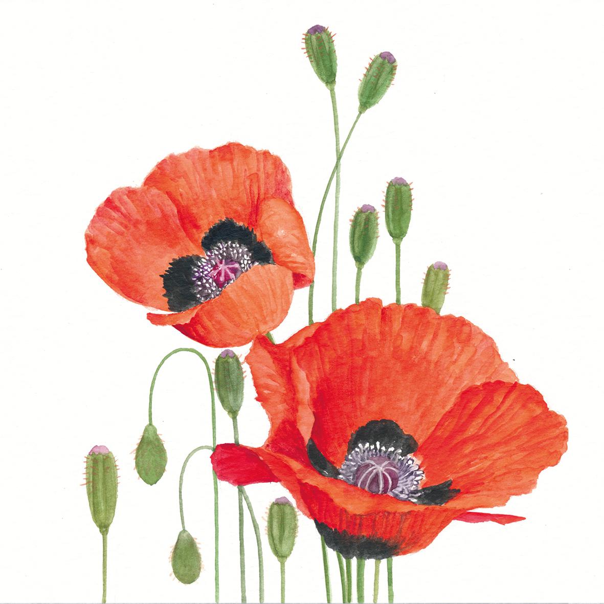 Poppies 33x33 cm