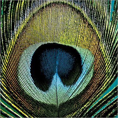 Paradise Peacock 33x33