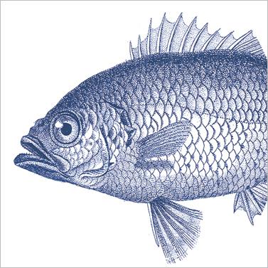Fish marine 33x33cm