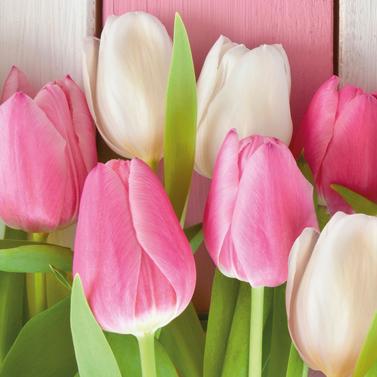 White & Pink Tulips 33x33 cm