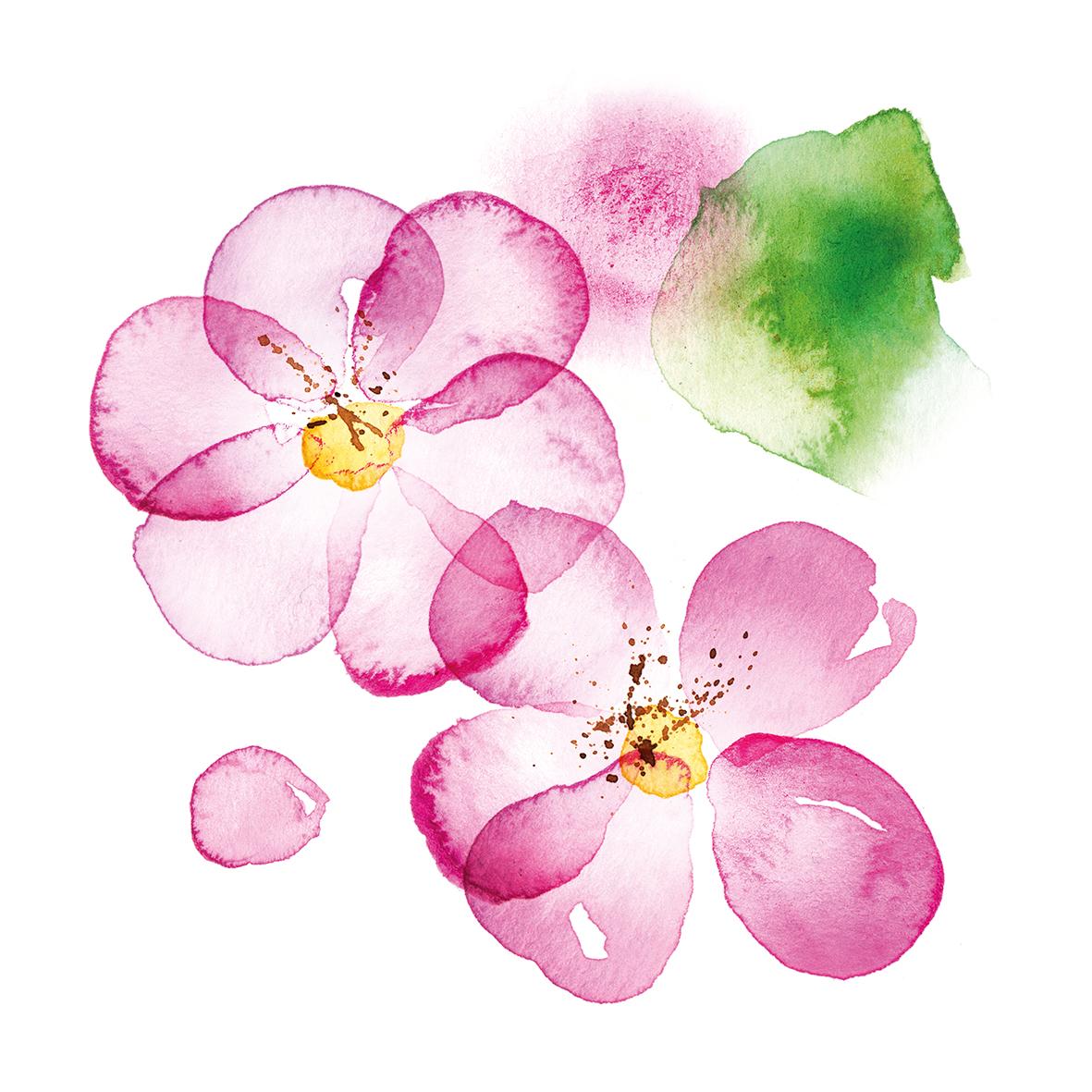 Blossom 33x33 cm